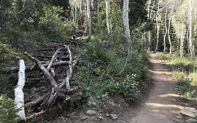 Wilderness Stewardship Project Makes Headway On Red Pine Trail